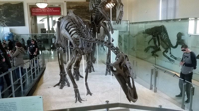 museu de historia natural